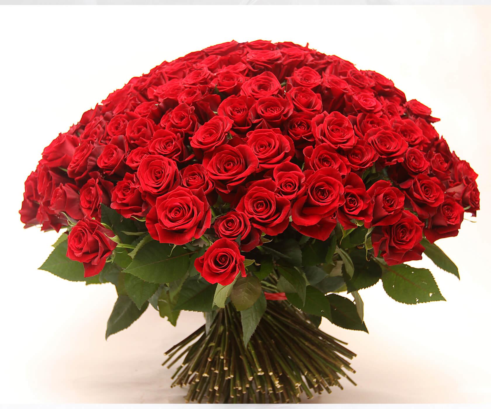 Букет алых роз фото с днем рождения