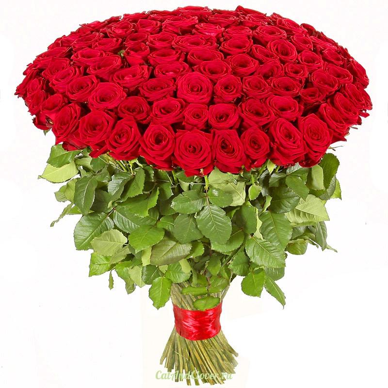 Картинки с розами красными букет
